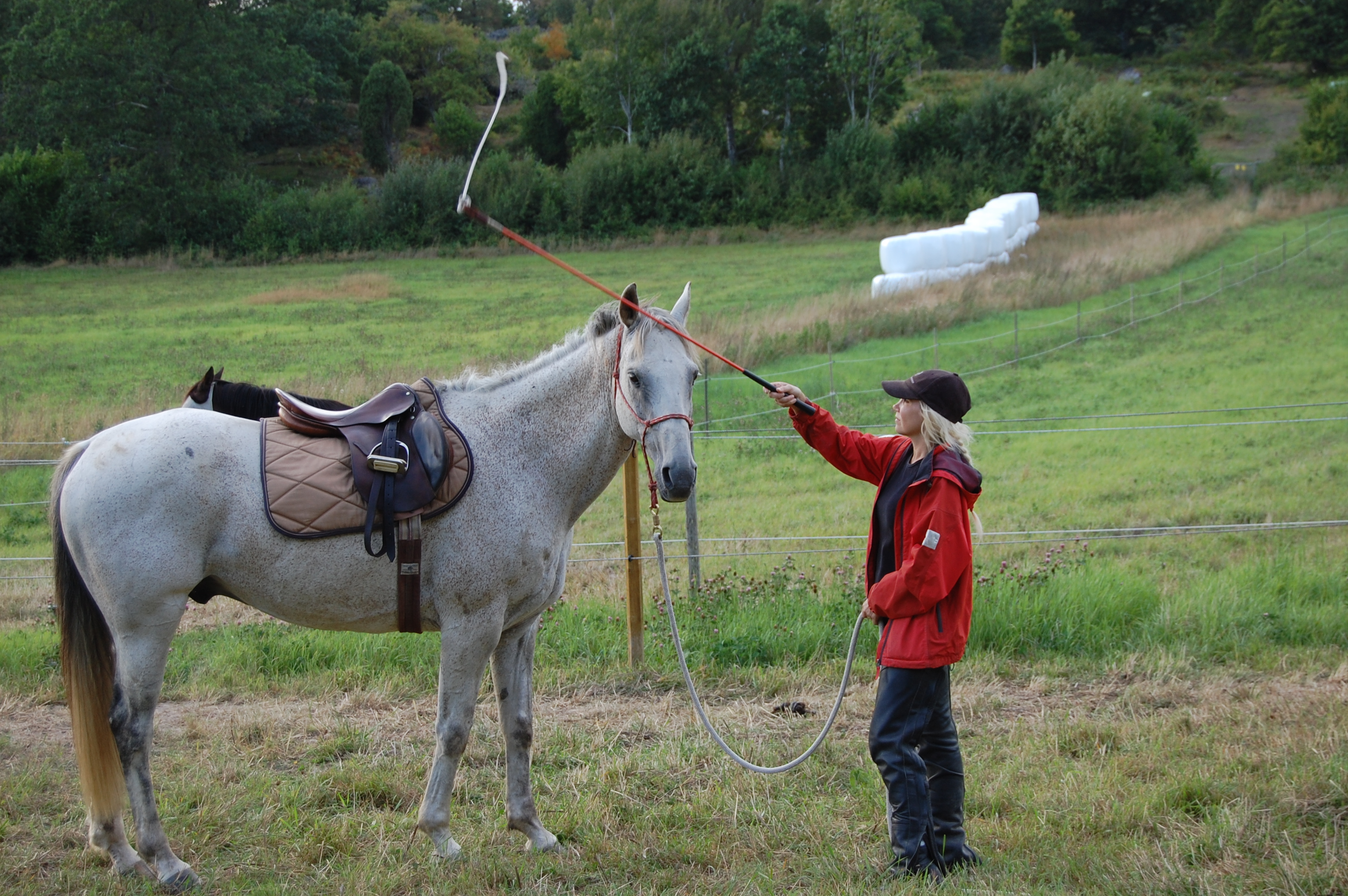 Friendly game-Parelli Natural horsemanship