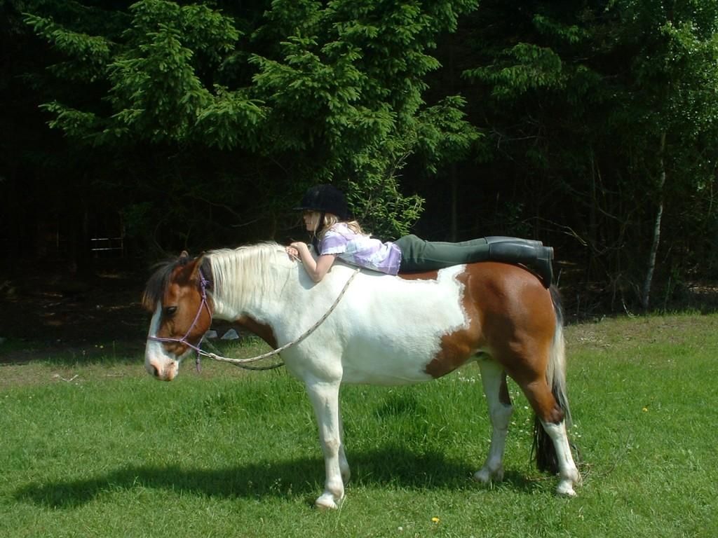 Relationen - autentisk horsemanship