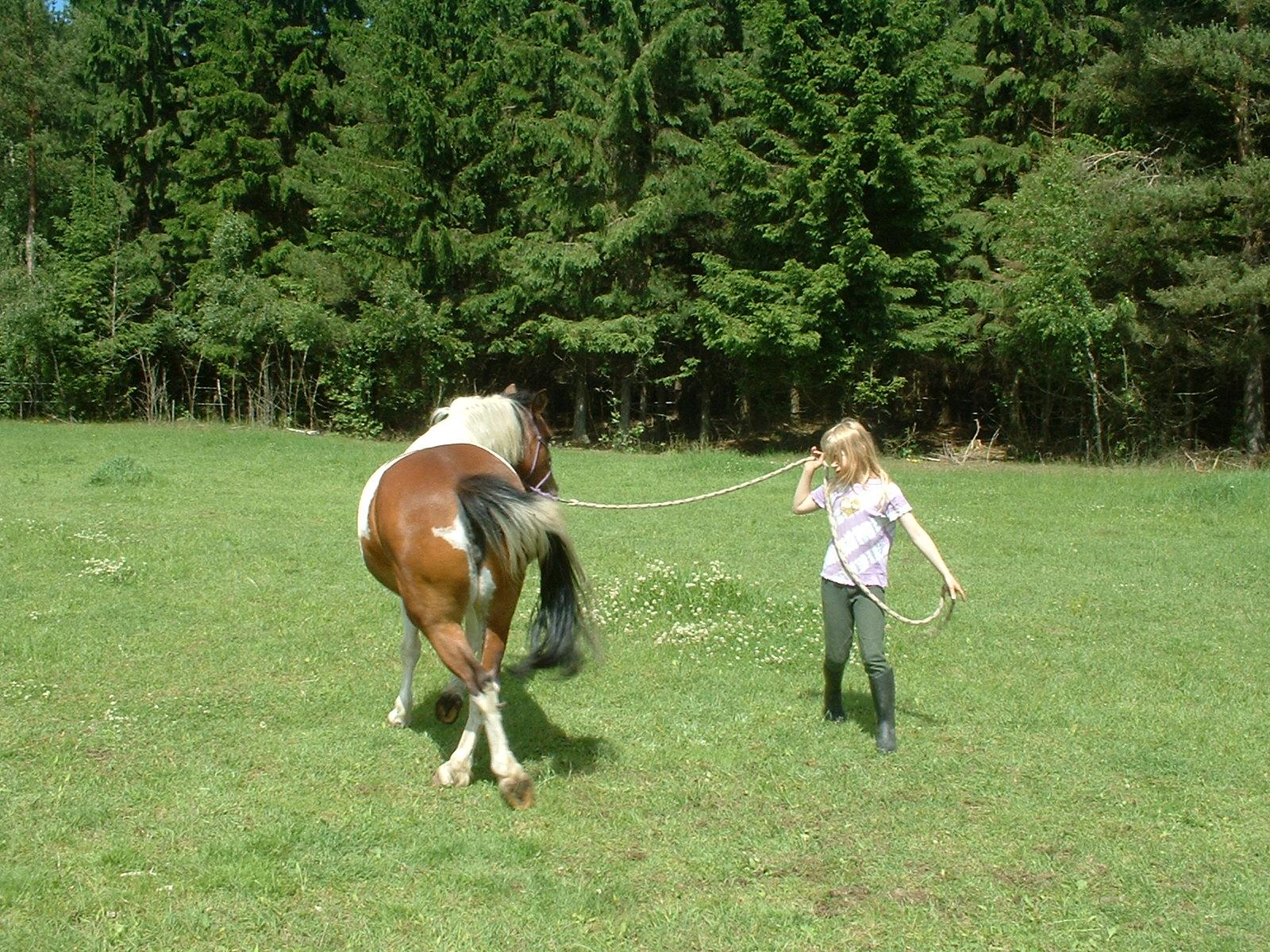 Driving game - natural horsemanship