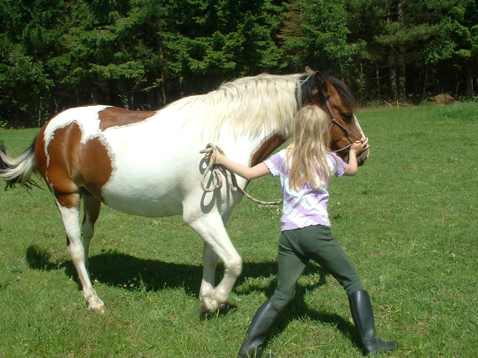 Porcupine game - natural horsemanship