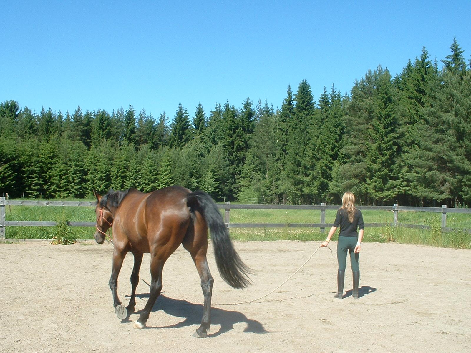Circling game -natural horsemanship