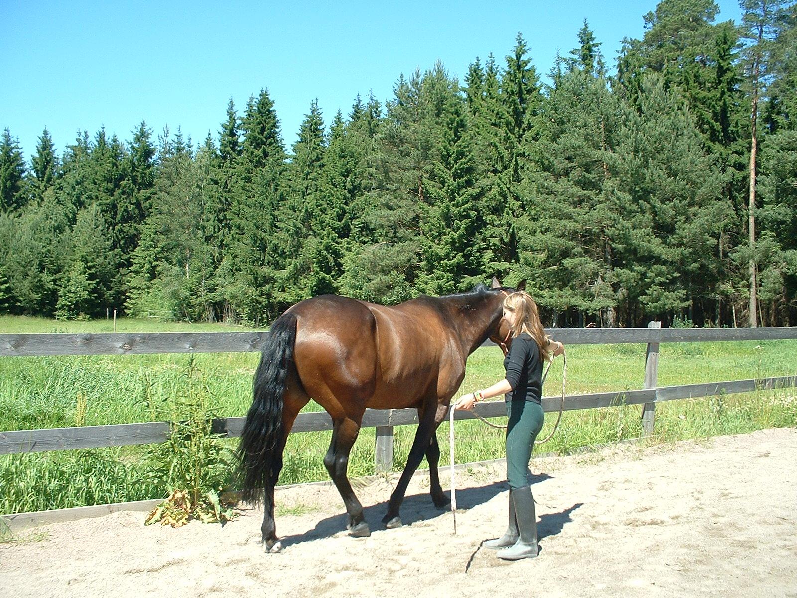 Squeeze game - natural horsemanship