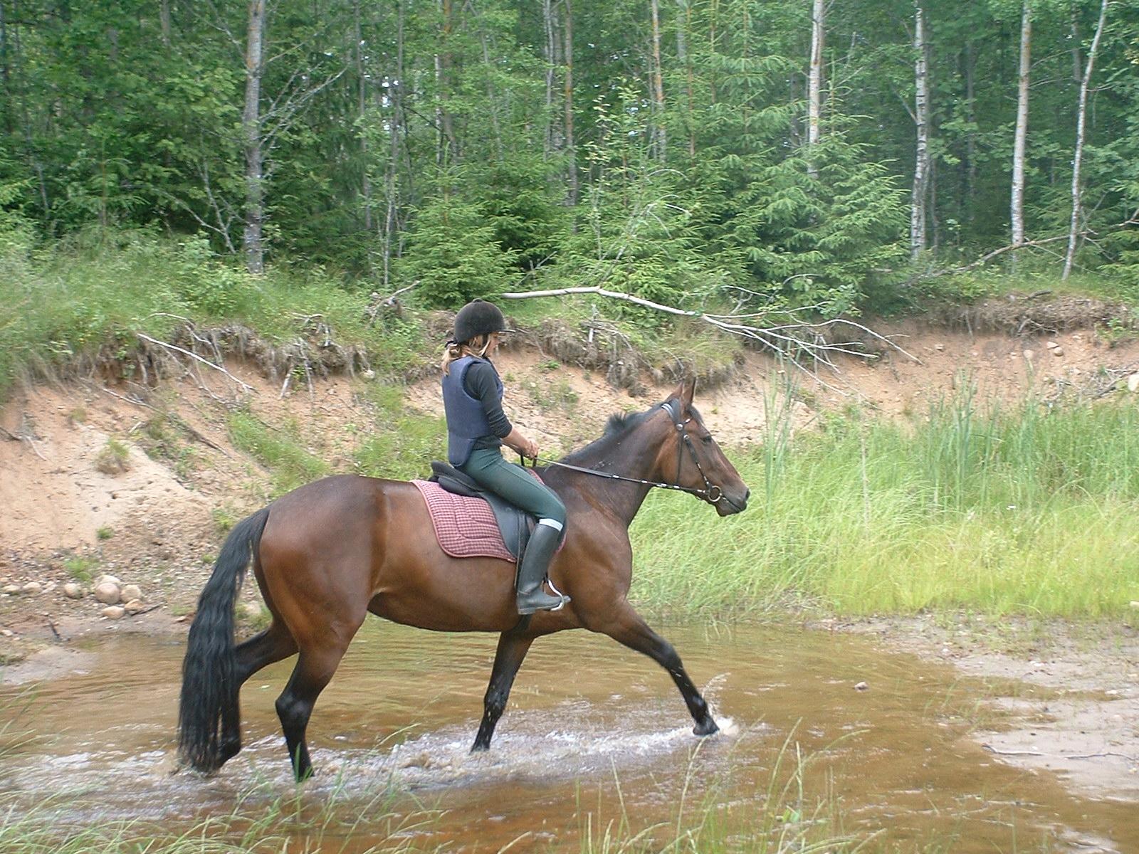 Ridning i naturen - Natural Horsemanship