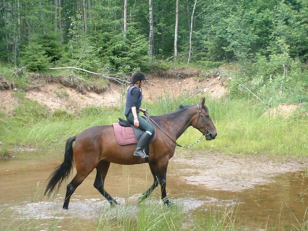 Rida ut i naturen - Natural Horsemanship