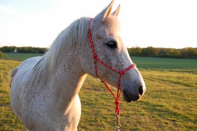Repgrimma - natural horsemanship