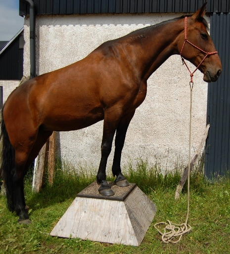 På pedestal - natural horsemanship