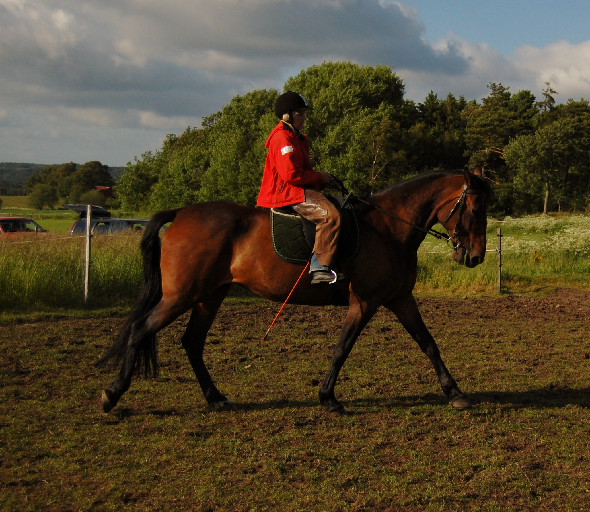 Finess natural horsemanship