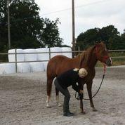 horsemanship seven games