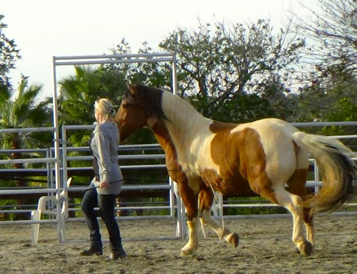 Dansa med hästar-Liberty Dancing