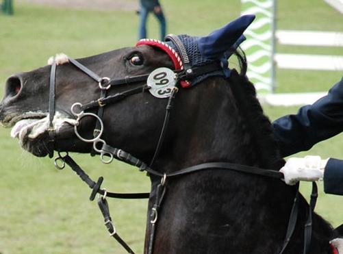 Hästsportens mörka baksida