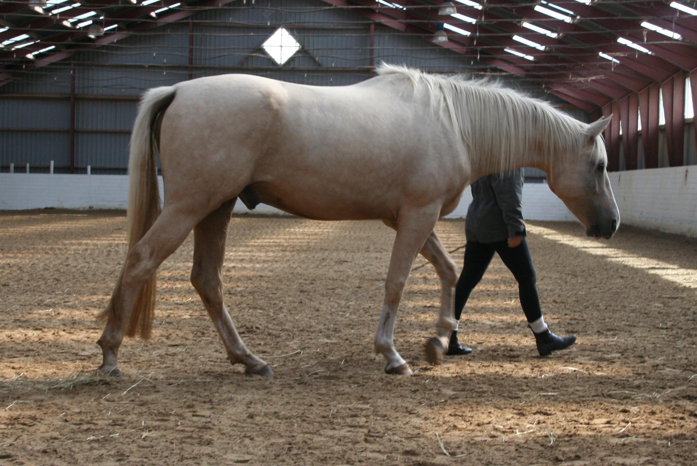 Liberty Horse Training kurs med Linda J Salinas