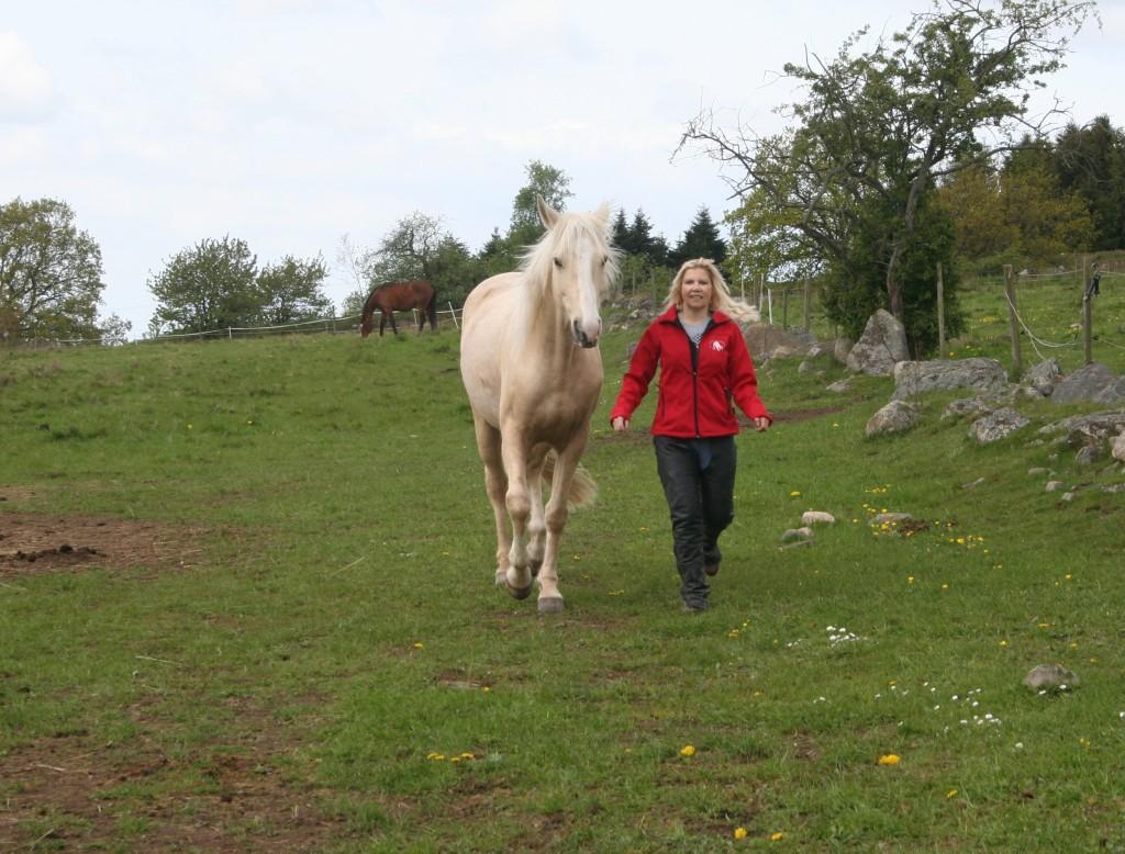 Svårfångad häst - ett minne blott
