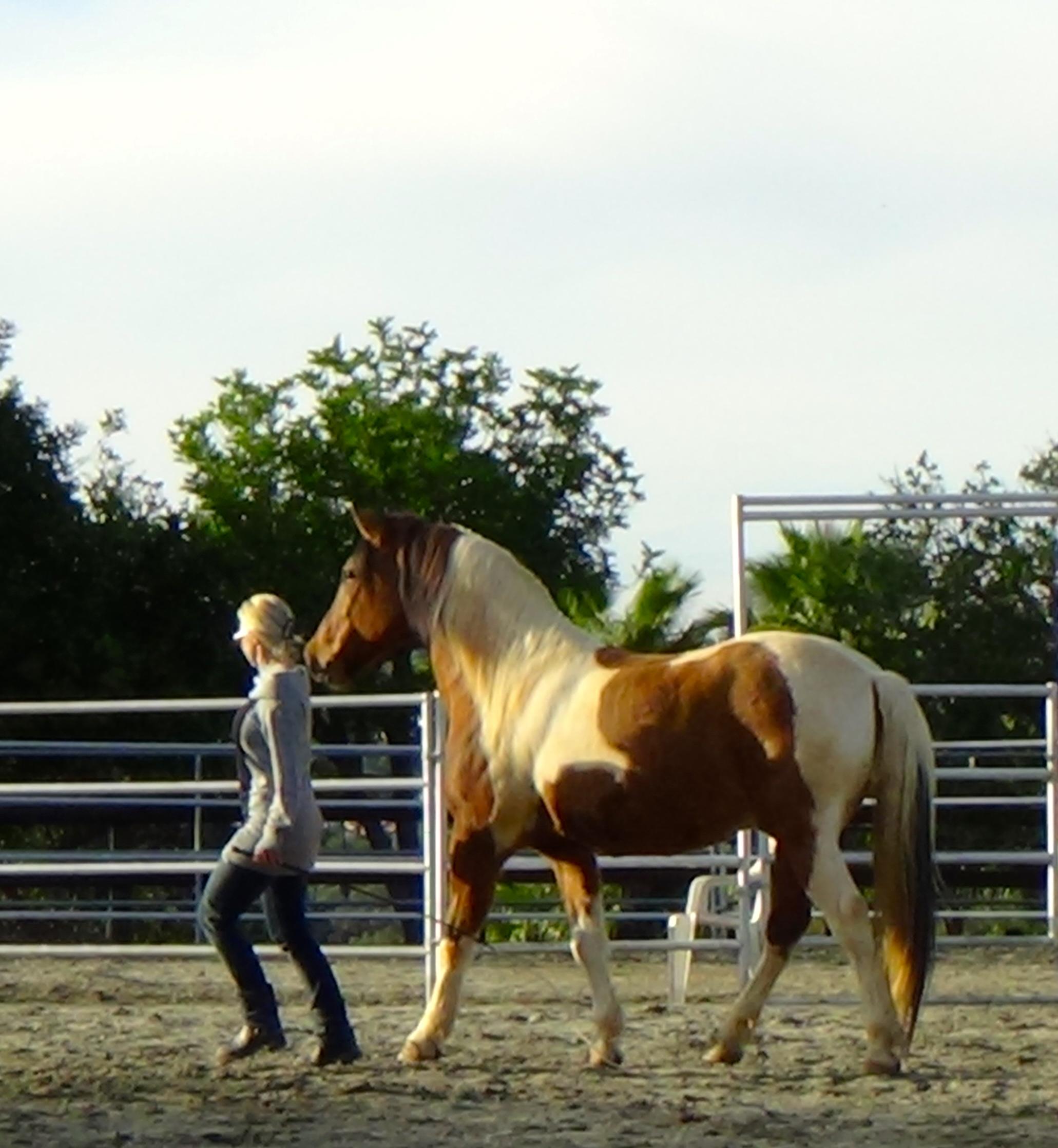 Liberty Dancing -Anneli Westlund