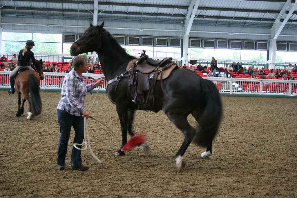 Buck Brannaman clinic horsemanship