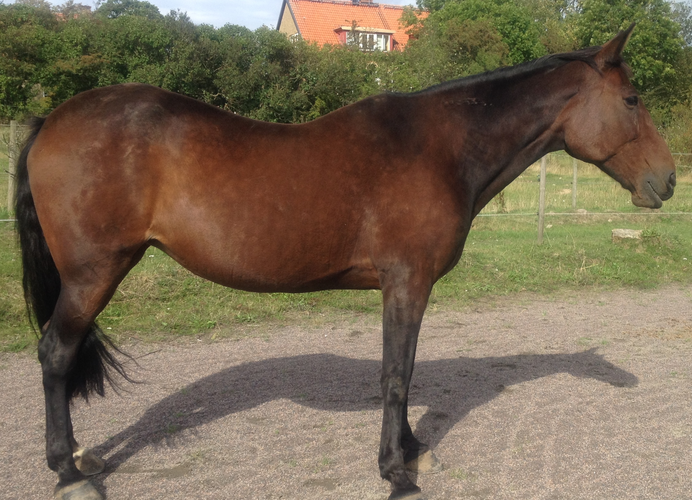 Metall-häst