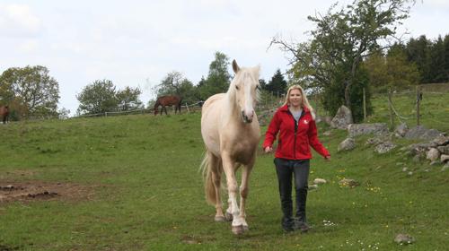 kronisk bronkit hos häst